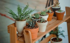 Several pots with plants on a wooden shelf.