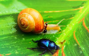 Snail, an ant and another insect standing on a leaf