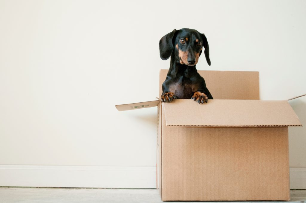 Pet care when moving. Don't pack your dog last! Top ten moving mistakes and how to avoid them.