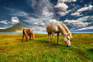 Horses on the meadow.