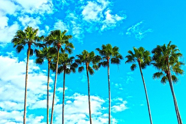 A view of palm trees and a blue sky