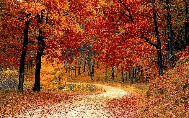 Fall in forest.